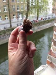 Hand holding a piece of bitten Belgium chocolate