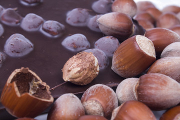 pile of hazelnuts with milk chocolate