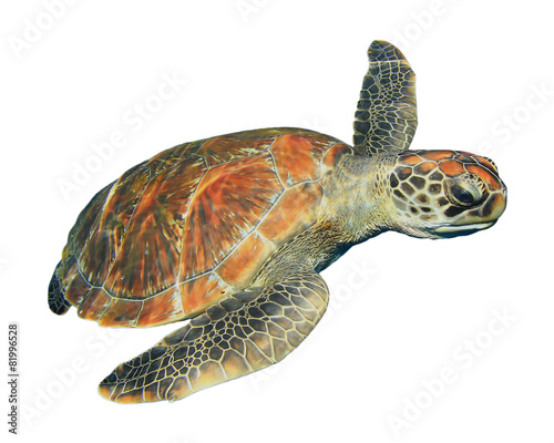 Papiers peints Tortue Green Sea Turtle isolated on white background