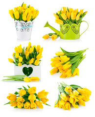Set bunch yellow tulips. Isolated on white background