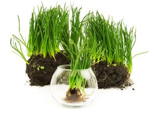 Grass concept