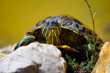 Черепаха выбралась на берег