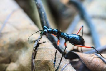 Macro of black ant