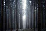 Lichtung im Nebelwald