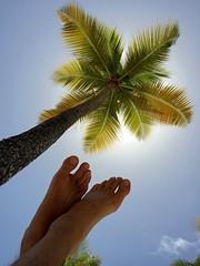 á l'ombre d'un palmier