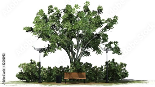 Park Bench with Street lantern under a tree on white background - 82002953