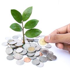 bank,piggy bank,Money,Coins,Concept,Tree