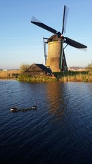 Windmill and duck family in canal