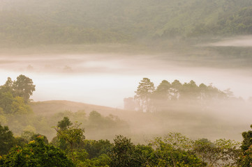 Beautiful misty sunrise on tropical forest mist.