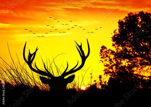 Foto op Canvas Hert animales y naturaleza