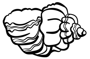 Contour image of a shell