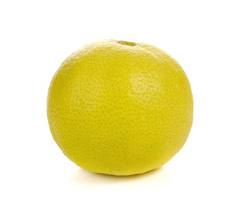 Yellow lime on white background