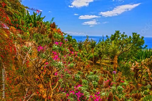 Papiers peints Jardin Botanical Garden Monte, Funchal, Madeira, Portugal