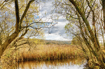 Reeds and pond at Leighton Moss, Lancashire