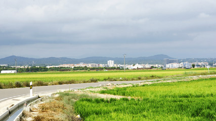 Plantaciónes de arroz en el Delta del Ebro, Amposta, Tarragona