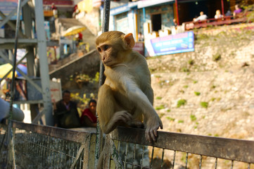 Monkey sitting on a bridge in Rishikesh