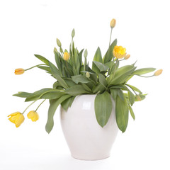 white pot with yellow tulips