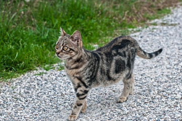 Little posing cat