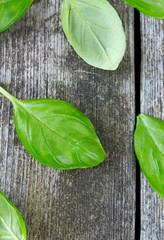 fresh basil leaves on wooden surface