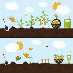 Vector garden illustration in flat style.