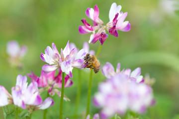 密を吸う蜂(ハチ)