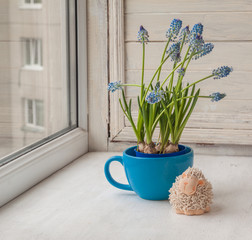 Blooming muscari in blue cup and  lamb on the window