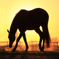 Mustang im Sonnenaufgang