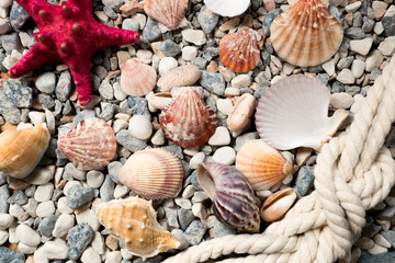 background with colorful seashells and ropes lying on seashore