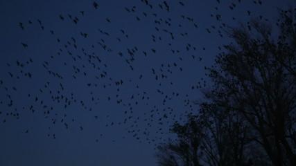 Bird in the dark