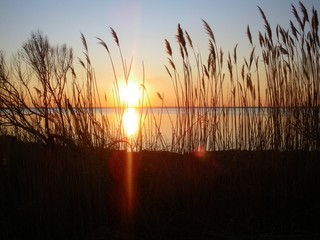 Sunset over the lake through the shore grass.