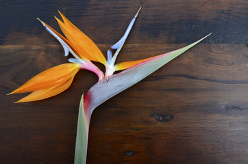 Bird of Paradise flower on wood background.