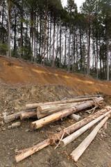 山林の開墾