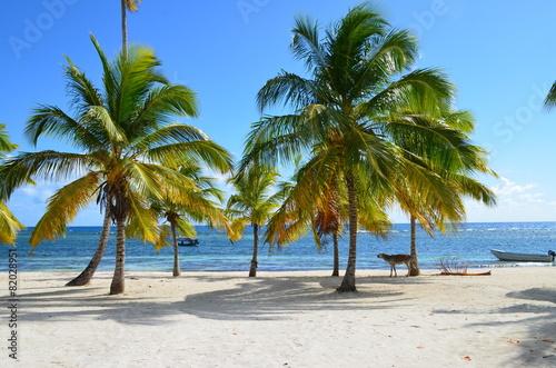 Foto Spatwand Ezel asino in spiaggia2