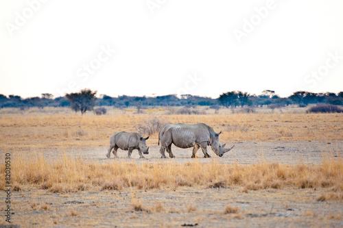 Tuinposter Neushoorn Deserto del Kalahari, Botswana, Africa