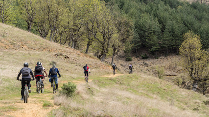 Group of mountain bikers in the forest.