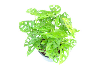house plant potted plant isolated on white background