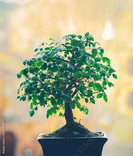 Aluminium Bonsai Bonsai Tree