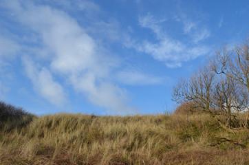 dune grasses on coastal dune at Belgian seaside