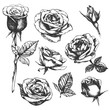 Set of highly detailed hand-drawn roses. Vector - 82038934