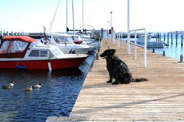 schwarzer Hund auf steg