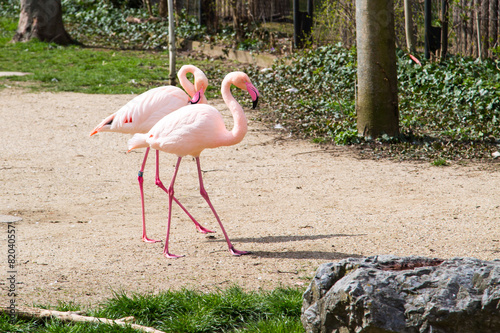 Tuinposter Flamingo Pink flamingos couple