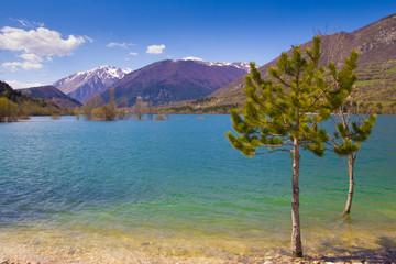 Pini nel lago
