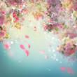 Spring Cherry Blossom Background