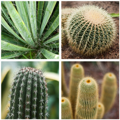composition cactus