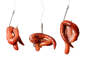 set fishing hooks with earthworms