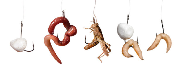 set of baits on the hook isolated on white background