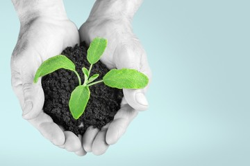 Hand. Hand holding green seedling with soil