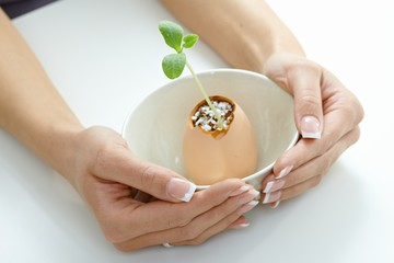 Plant shoot in eggshell in bowl cupped by hands