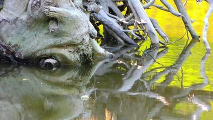 Dry Wood Dead Tree in Green Lake