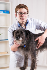 Vet examining a dog with a stethoscope in the office